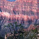 A grand canyon view 2 by Ted Petrovits