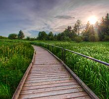 Boardwalk Through Wetlands by Myron Watamaniuk