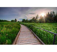 Boardwalk Through Wetlands Photographic Print