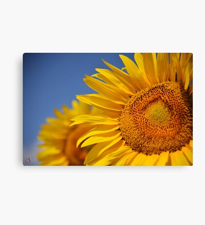 Summertime Blooms of Southern France Canvas Print