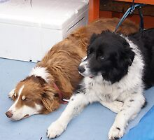 Dogs on the Ferry to Knoydart by csummers
