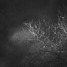 IR Spotlight by Crispin  Gardner IPA