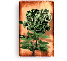 WILD IRISH ROSE - 051 Canvas Print