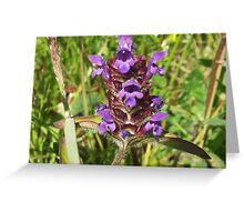 selfheal flowerhead Greeting Card