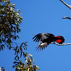 Black Red Tail I by savaggio