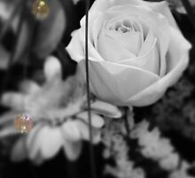 Rose Drops by ElsieBell