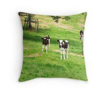 Young cows enjoying summer Throw Pillow