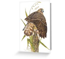 Australasian Harrier Hawk  2011 Greeting Card