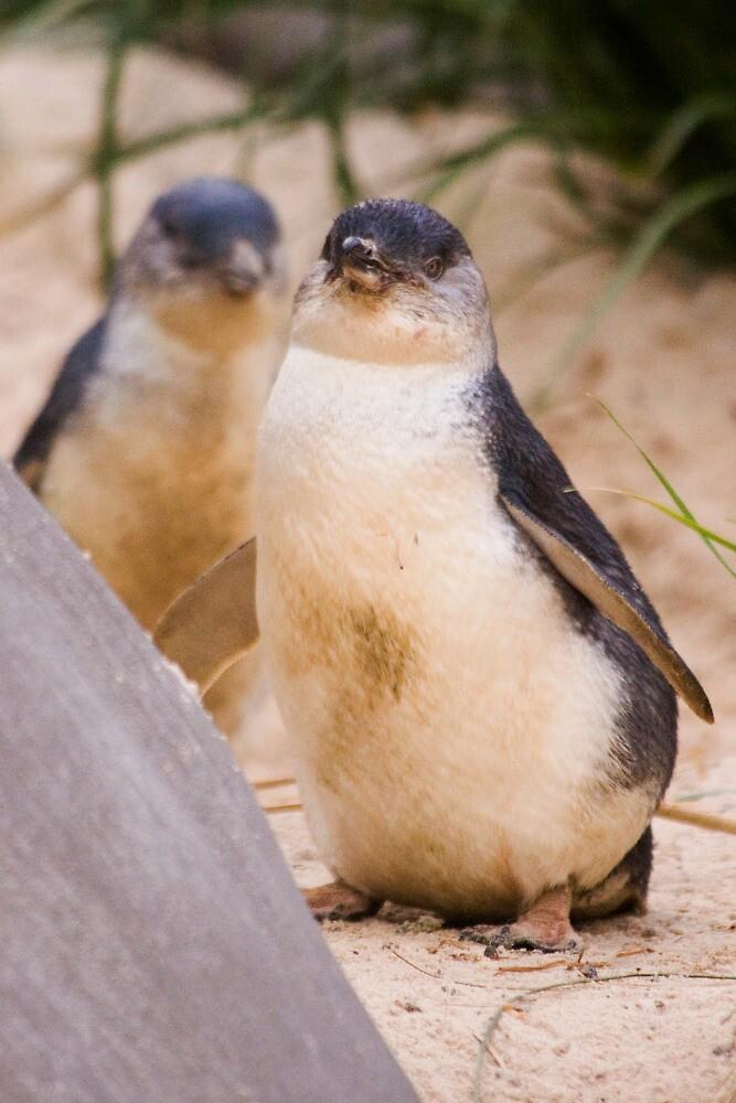 Penguin by Darren68