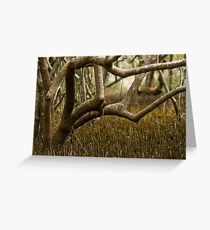 Wetlands at Lake Weyba Sunshine Coast Greeting Card