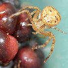 blackberry spider by katpartridge