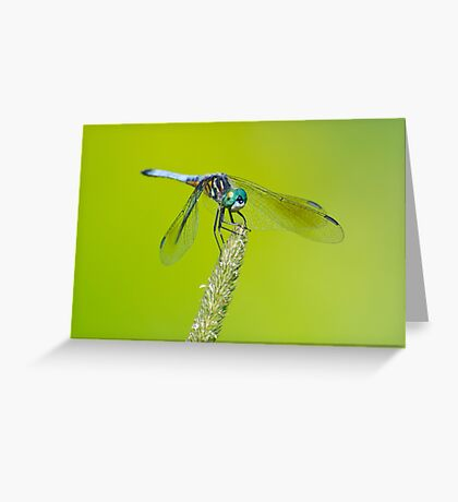 Blue Dasher on Timothy Greeting Card