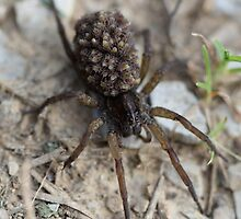 momma spider with 1001 babies on her back by katpartridge