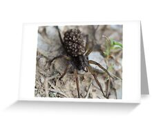 momma spider with 1001 babies on her back Greeting Card