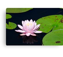 Pink Water Lily on the Ipswich River Canvas Print