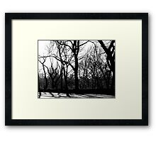 Forest in the City Framed Print
