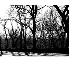 Forest in the City Photographic Print