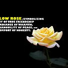 Yellow Rose.  by Gwoeii