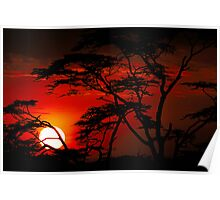 Serengeti sunset Poster