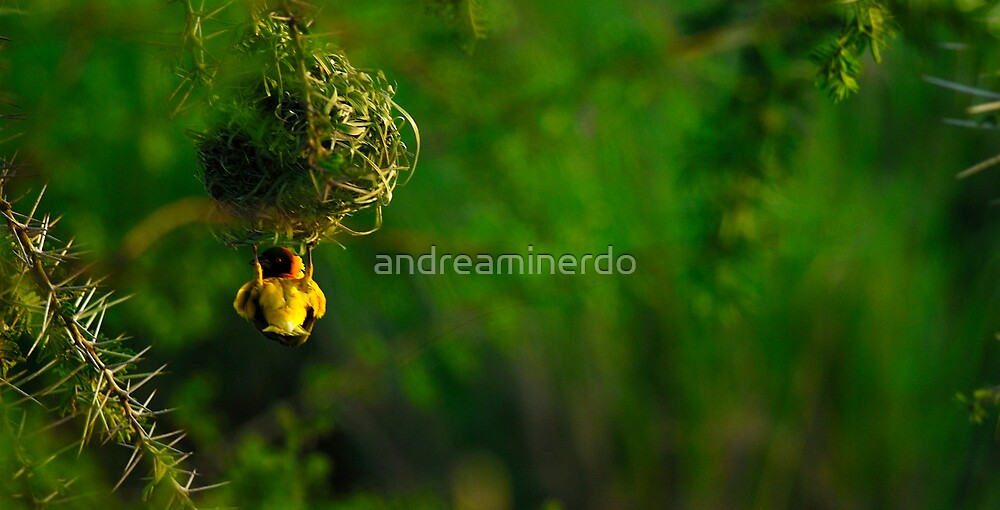 The nest climber by andreaminerdo