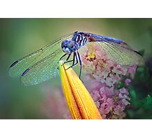 Dragon in the Garden Photographic Print