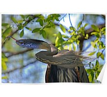 The Great Blue Snake Bird Poster