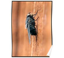 Fly On The ... Fence Poster