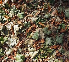 Top view of the green and brown fallen leaves of maple and chestnut by vladromensky