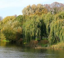 Weeping Willows by Roz Castle