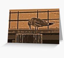 Enhanced Seagull Greeting Card