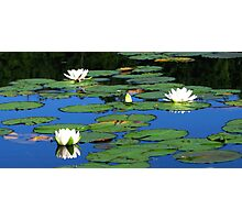 Water Lilies at Laurel Lake Photographic Print