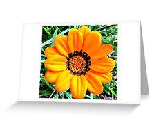 Gazania Krebsiania Greeting Card