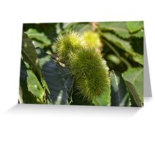 Chestnuts roasting on an open fire ........... Greeting Card