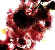 l'arc de fleur by d w Stojek