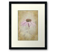 Dusky Echinacea Framed Print