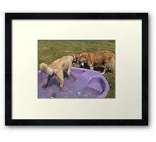 Grr! Back off Lance! This is MY TIME for the pool! Framed Print
