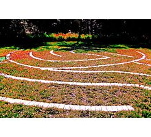 labyrinth bright Photographic Print