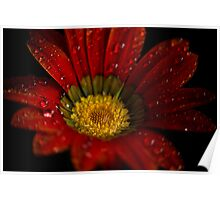 Red daisy Sunrise Beach Poster