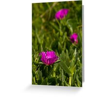 Dune flower Sunrise Beach Greeting Card