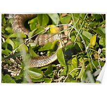 eastern brown snake Poster