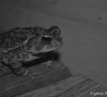 Bob The Toad by dstressman
