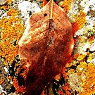 Lonely leaf on a lonely shore. by Fara