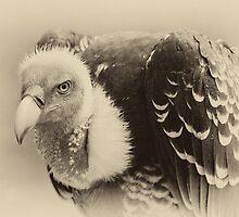 Rueppell's Vulture: After a shower by Lenka