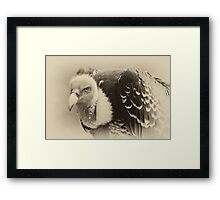 Rueppell's Vulture: After a shower Framed Print