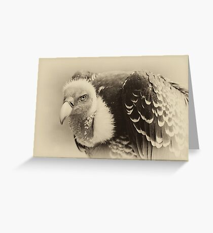Rueppell's Vulture: After a shower Greeting Card