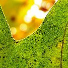leaf veins by tego53