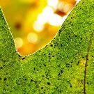 leaf veins by tego53