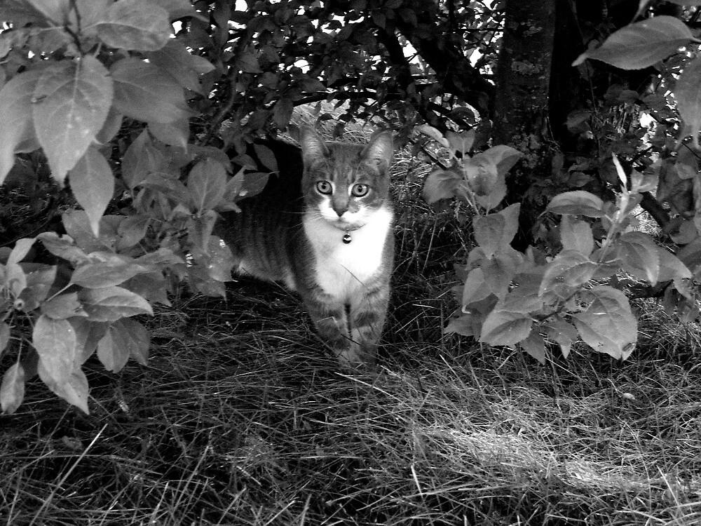 Sly Cat by takemeawaycn