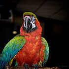 Red-lored Amazon Parrot by cnysmile