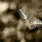 Butterfly Moth by C. Michael Cox